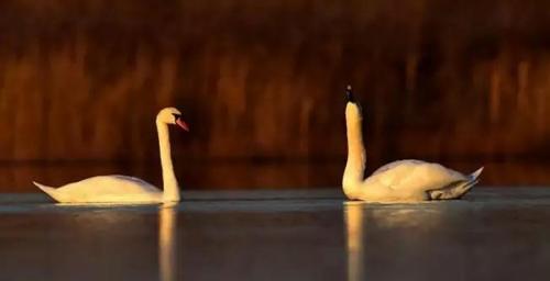 观鸟节——湿地摄影展