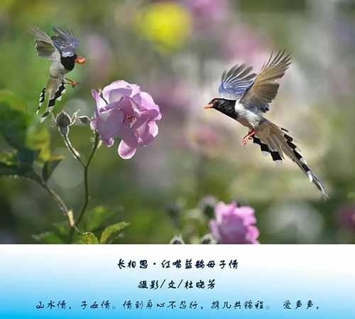 20210825庄蝶文学社